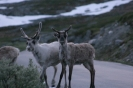 Kelionė į Norvegiją_1